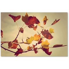 Trademark Fine Art ''Still Fall'' Canvas Wall Art by Philippe... ($51) ❤ liked on Polyvore featuring home, home decor, wall art, orange, fall home decor, orange wall art, leaf canvas wall art, canvas wall art and orange home decor
