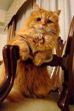 orange cat on his chair :)