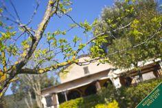 The Structure www.torreburchio.com