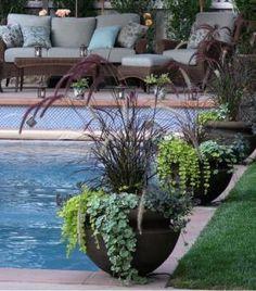 Pots around pool: Pennisetum rubra, lysmachia, glenchoma, sedum