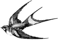 This swallow is so pretty, shown in flight.