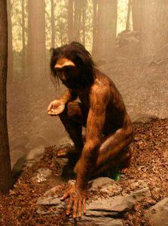 Reconstitution Homo erectus