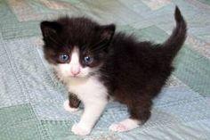 <3 OMG kittens r so freakin cute!!!