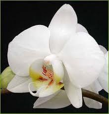 Orquidia....  A minha flor favorita!