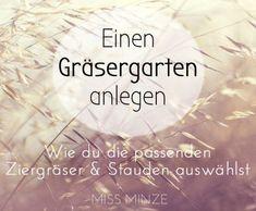 Gartengestaltung mit Gräsern - Mein Pflanzplan für trockene Böden Gräser Garten anlegen Gräsergarten