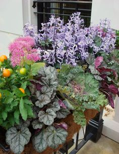 Fall Plants - Fall window box with multiple textures and colors.