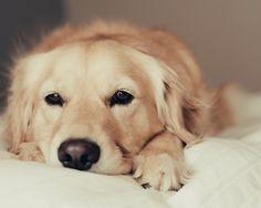 Resultado de imagen para imagenes de perritos tiernos
