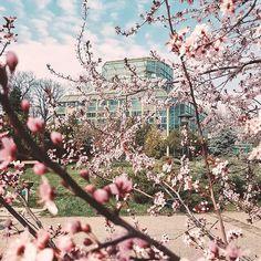 wellness travel Romania (@chiqueromania) • Instagram photos and videos Days Out, 10 Days, My Last Day, Bucharest, Romania, City Photo, Feels, Wellness, Bear