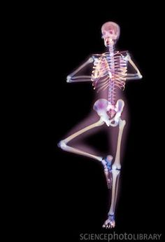 Ever wondered what a body looks like while doing yoga? Science Photo Library answers that question with these fascinating x-rays, like this one in the tree pose.