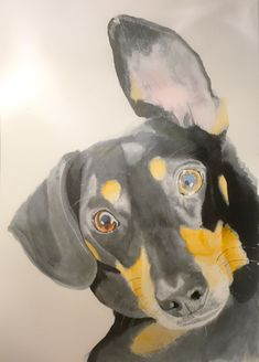 Milly Moo #art #watercolour #dog