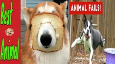 #tiere #süß #katzenvideos😹 Süße und Lustige Tiere! 2019 😺 Lustige Tiere ... Animal Fails, Funny Fails, Dogs, Animals, Funny Cats, Funny Vidos, Animales, Animaux, Fun Nails