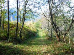 Chemin de randonnée très agréable à Escot, circuit Bilboquet