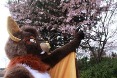 Photo by teru_tt on Twitter!! A very cute bat fursuit!!