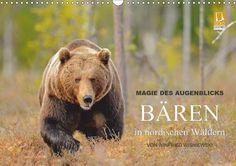 Magie des Augenblicks - Bären in nordischen Wäldern - CALVENDO Kalender von Winfried Wisniewski - #kalender #calvendo #calvendogold #fotografie #tierfotografie #baeren