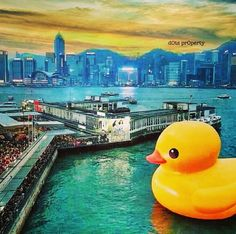 Rubber Duck Project. Hong Kong