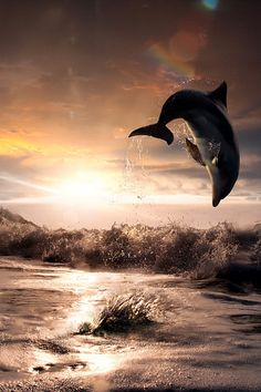 """""""Beautiful Sunset and Dolphin ~ By Vitaliy Sokol"""""""