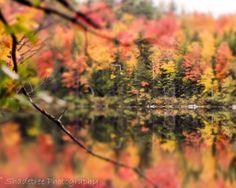 Fall Foilage Vibrant Bright Red Green by ShadetreePhotography, $25.00