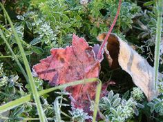 The Small Gems: When Morning Frost Breathes on the Earth...