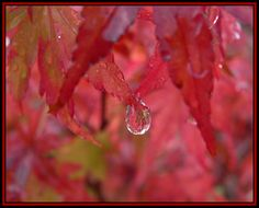 Beauty in a Raindrop!