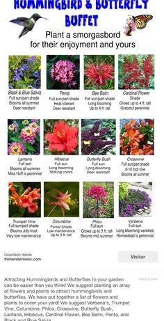 Flores para atraer mariposas, y colibríes ...¡le encantan las flores rojas!