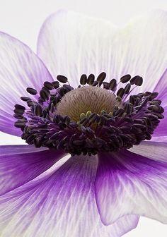 Delicate Flowers Garden Love