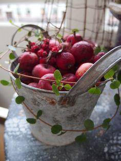 Apple Bucket!