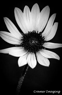 Wild Sunflower.  Learn more about it and our #IdahoArt at www.cramerimaging.com.