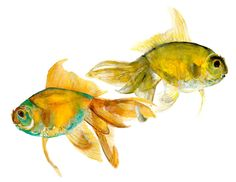 goldfish - pisces - two fish watercolor print signed by artist Stephanie Kriza. $19.99, via Etsy.