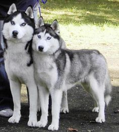 When I was little all I wanted to have when I grew up was a Red Jeep Wrangler and a Husky. :)