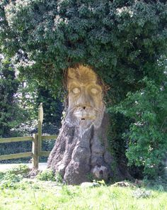 This tree carving which has been rally well done, takes on a real SPOOOKEY appearance at DUSK.