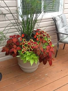 27 pretty front door flower pots for a good first impression 00011 - poserforum Container Flowers, Flower Planters, Container Plants, Container Gardening, Deck Flower Pots, Gardening Tips, Flower Beds, Organic Gardening, Outdoor Flowers