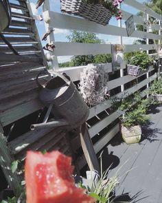 Morgen ihr Lieben. Genießt den sonnigen Tag 🔆☀️🔆 #interior #balkon #terasse #garten #draussen #blumen #vintage #deko #wassermelone… Instagram, Plants, Interiors, Flower Vintage, Sunny Days, Watermelon, Mornings, Planters, Plant