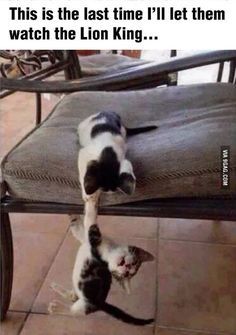 Funny pictures about Playing Lion King. Oh, and cool pics about Playing Lion King. Also, Playing Lion King photos. Funny Animal Memes, Funny Animal Pictures, Cute Funny Animals, Cute Baby Animals, Funny Cute, Funny Pics, Funny Images, Funniest Animals, Meme Pictures