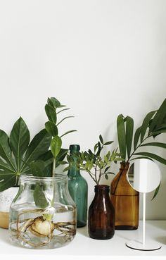 Plants and neutral flowers are my favorite piece of interior decoration at the moment, so I just can't stop looking at this latest styling by Susanna Vento for Sato. I love the way the green takes up all the attention … Continue reading → Indoor Garden, Indoor Plants, Home And Garden, Turbulence Deco, Deco Nature, Decoration Plante, Plants Are Friends, Interior Plants, Water Plants