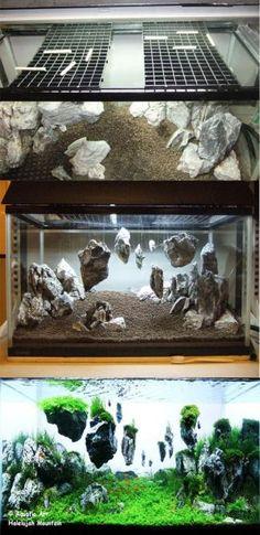 Magical world Aquascaping / Living Terrarium (WITH PHOTOS!), Page 1 – … – Beleuchtungsideen – Aquarium Aquarium Terrarium, Diy Aquarium, Planted Aquarium, Fish Tank Terrarium, Reptile Terrarium, Plant Fish Tank, Aquarium Aquascape, Garden Terrarium, Glass Terrarium