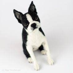 Sitting Boston terrier, needle felted sculpture