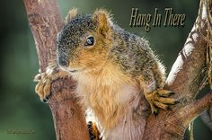 Hang In There By LeeAnn McLaneGoetz McLaneGoetzStudioLLC.com This is one tough squirrel. He had an visit from a raptor that sliced him up bad, then survived the record cold polar vortex. I did not expect him to survive the winter but today he was still hanging in there. On the Macomb Orchard Trail Washington Michigan #Squirrel,#McLaneGoetzStudioLLC.com