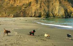 Pups @ Sharp Park Beach, Pacifica