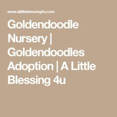Goldendoodle Nursery | Goldendoodles Adoption | A Little Blessing 4u