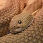Geliehene Hasen an Schlange verfüttert: 1 Monat Haft