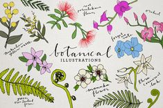 38 gorgeous hand-drawn botanical and floral clip art illustrations. Includes orchids, manuka flowers, ferns, forget-me-nots and more. Great for wedding or party Illustration Blume, Pencil Illustration, Graphic Illustration, Art Floral, Tropical Flowers, Spring Flowers, Zealand Tattoo, Leaf Clipart, Affinity Photo