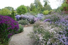 Picton Garden with asters