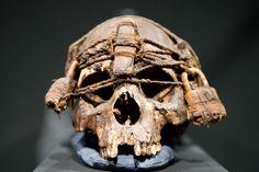 Ausstellung Schädelkult Memento Mori, Conquest Of Mythodea, Real Human Skull, Shrunken Head, Horror Decor, Arte Horror, Skull Tattoos, Gothic Art, Skull And Bones