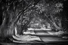 """The Avenue 2"" by islandtime"