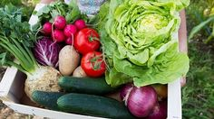 How going vegetarian could help save the planet from climate change Gabriel Method, Juicy Steak, Going Vegetarian, How To Eat Less, Save The Planet, Health Advice, Detox, Disorders, Healthy Eating