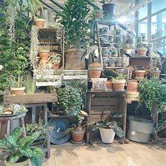 garden center design, nursery, flower shop, florist KNOCK by GREEN FINGERS 天王洲…