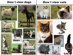 The main difference between cats and dogs is this: