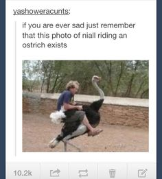 Niall Horan | Tumblr funny