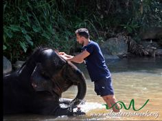 some washing time Elephant Ride, Sri Lanka, Freedom, Projects, Animals, Liberty, Animales, Political Freedom, Blue Prints