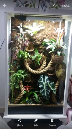 Wonderful Snap Shots Reptile Terrarium gecko Suggestions There's no question which using a puppy brings untold joy to help somebody's life. Any time plenty of people l. Crested Gecko Habitat, Crested Gecko Vivarium, Crested Gecko Care, Leopard Gecko Habitat, Leopard Geckos, Terrariums Gecko, Bartagamen Terrarium, Leopard Gecko Terrarium, Lizard Terrarium